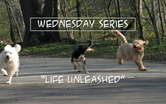 "Wed 2/22/17 – ""Everyone Is Someone"" – Life Unleashed"